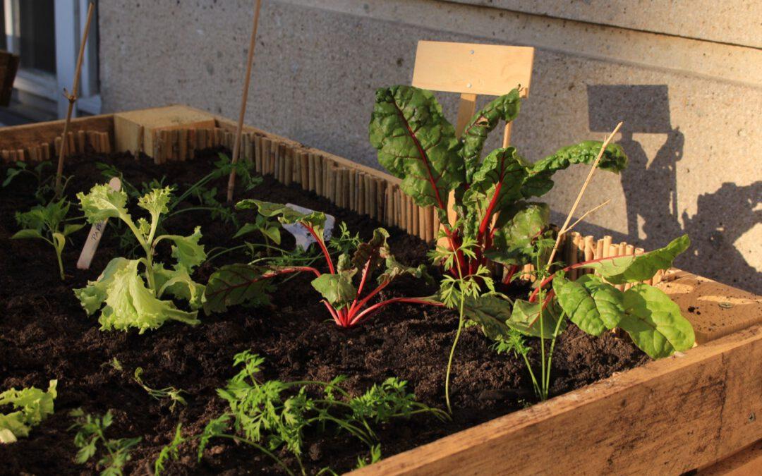 Vischers Hochbeete – bunte Vielfalt an Gemüse und Kräutern